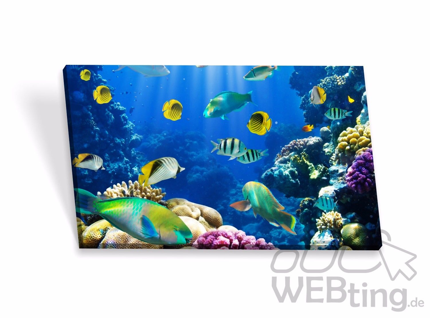 leinwandbilder aquarium keilrahmenbilder keilrahmen bilder poster leinwand bild. Black Bedroom Furniture Sets. Home Design Ideas