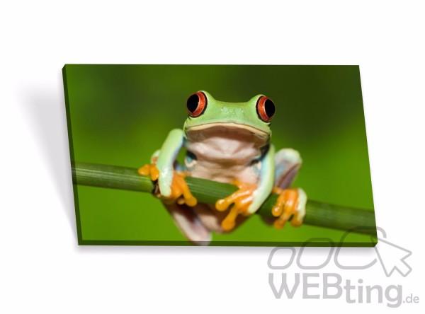 Leinwandbilder-Frosch-Keilrahmenbilder-Keilrahmen-Bilder-Poster-Leinwand-Bild-171864945679